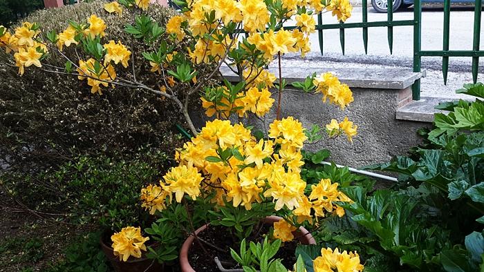1° maggio tra i fiori